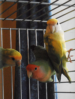 Love Birds, House & Pet sitting, Falmouth, Cornwall