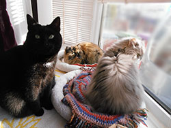 3 cats, Agatha, Cleo and Eva - Pop In Cat Care, Liverpool.